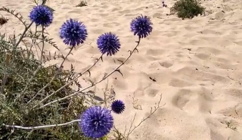 растение на песке