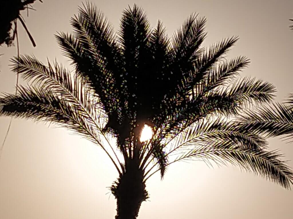 пальма в Египте на фоне неба